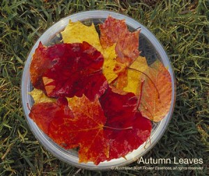 product_images_800x600_4_jpg_35_286_4fed945153301_autumn_leaves