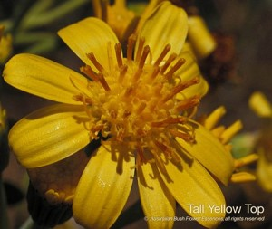 product_images_800x600_4_jpg_96_406_4ff169e986499_tall_yellow_top